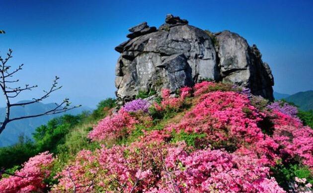 花之寨 英山县天马寨风景区|英山县篓子石旅游开发|县